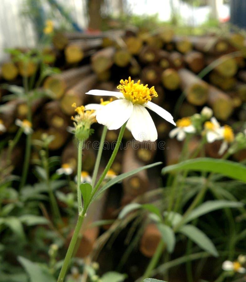 Fleur de travail image stock