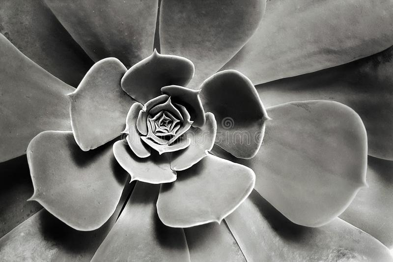 Fleur de vue supérieure photo stock