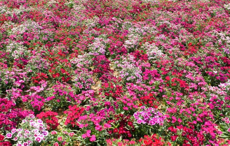 fleur de zone photo libre de droits
