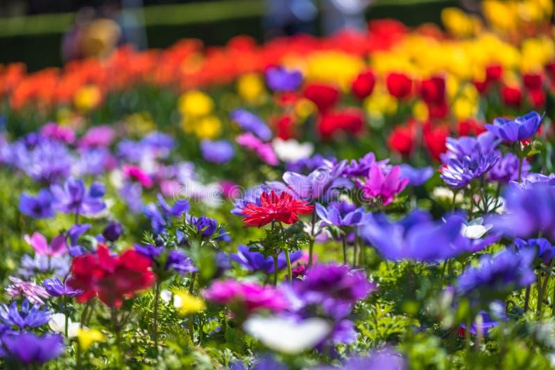 fleur de zone images libres de droits