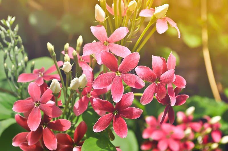 Fleur douce rose de main dans le matin images stock