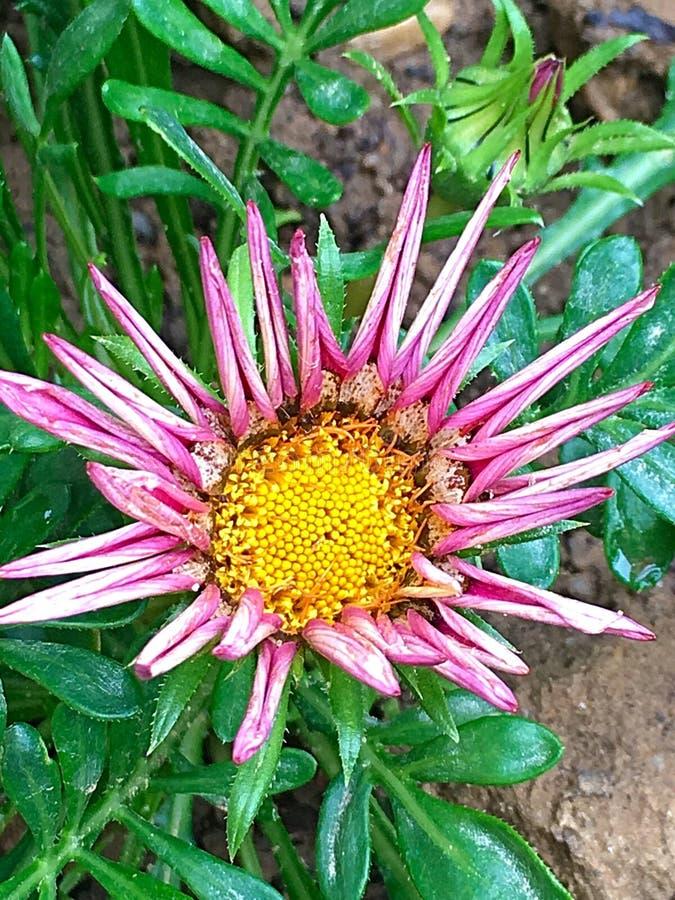 Fleur drôle photo libre de droits