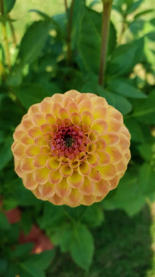 Fleur du cadeau de la nature photographie stock