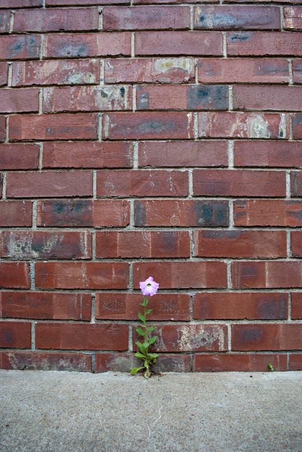 Fleur en béton image libre de droits