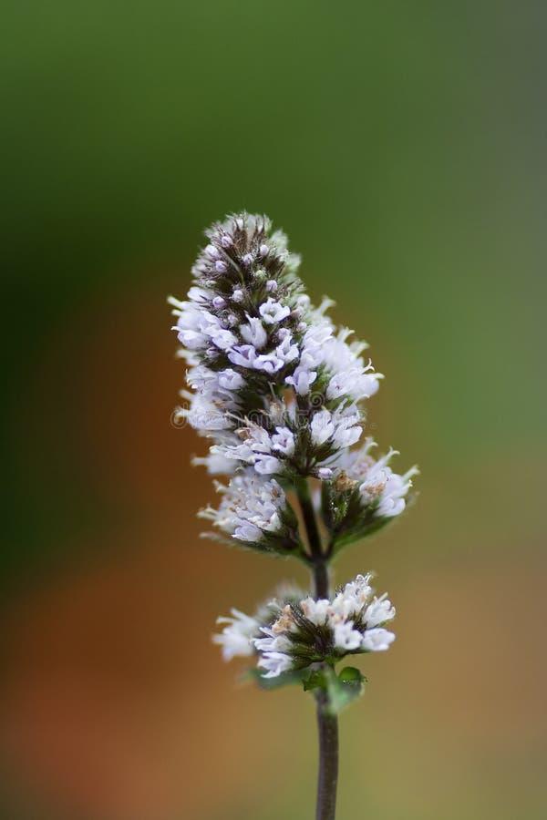 Fleur en bon état photo libre de droits