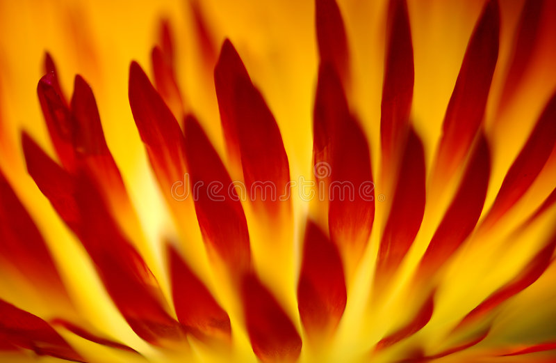 Fleur en flamme image libre de droits