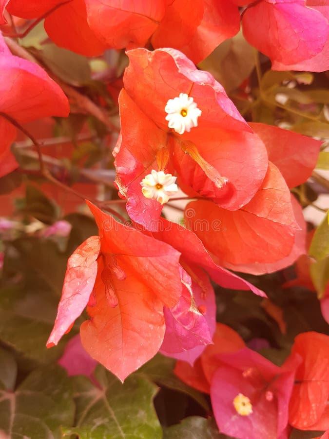 Fleur en Grèce photo libre de droits