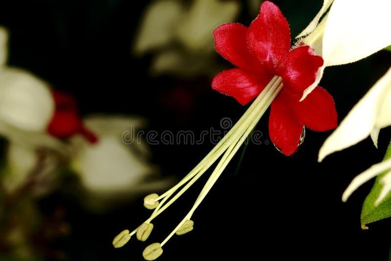 Fleur en gros plan photographie stock libre de droits