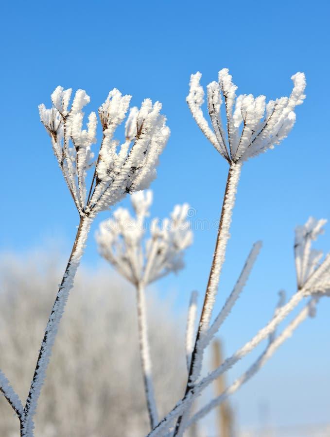 Fleur en hiver photographie stock libre de droits