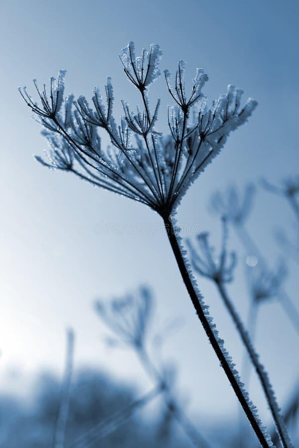 Fleur en hiver photos libres de droits