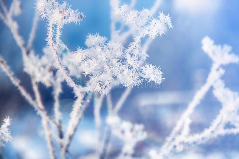 Fleur en hiver avec les cristaux de glace congelés Fond naturel saisonnier de bel hiver Horizontal de l'hiver photo stock