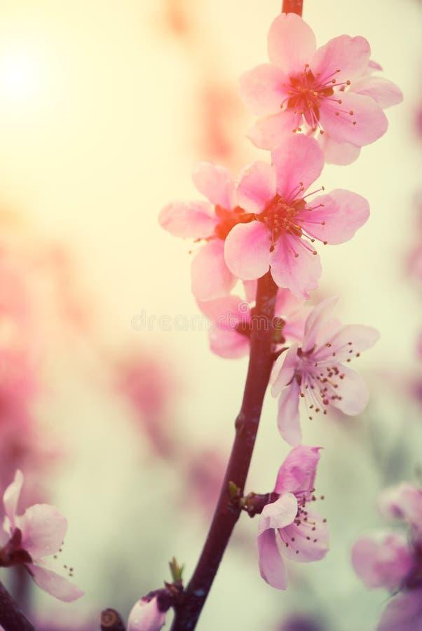 Fleur en pastel de ressort de tons photos stock