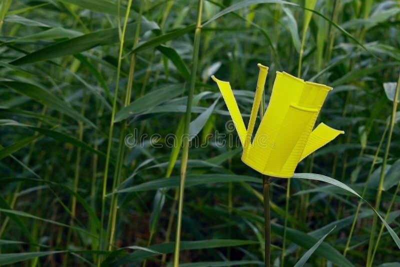 Fleur en plastique photo libre de droits