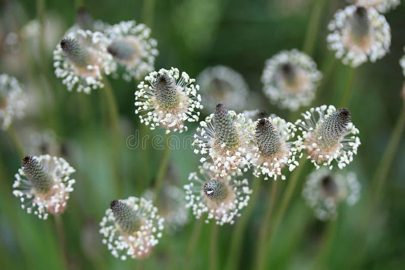 Fleur en verre photos libres de droits