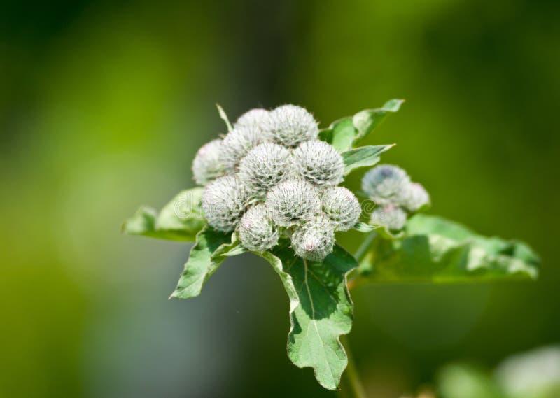 Fleur en Web images stock