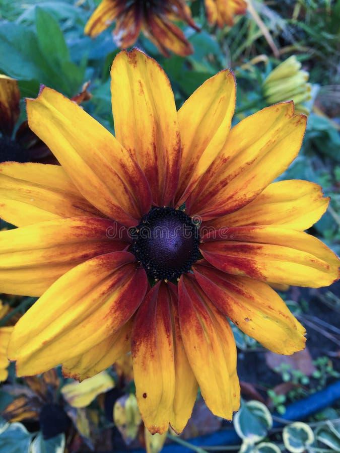 Fleur ensoleillée photos stock