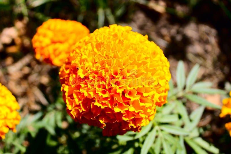 Fleur ensoleillée photographie stock libre de droits