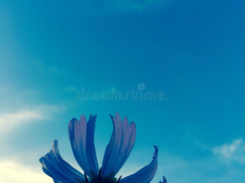 Fleur et ciel photo stock