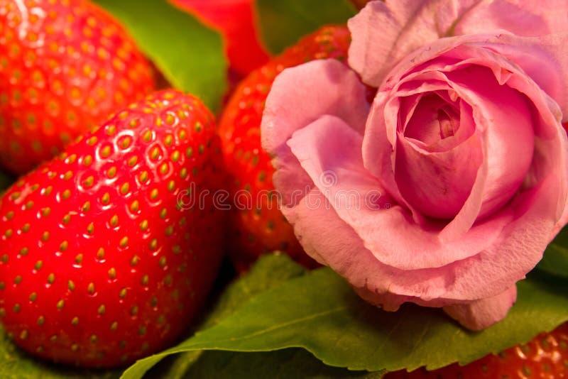 Fleur et fraise de Rose photo stock