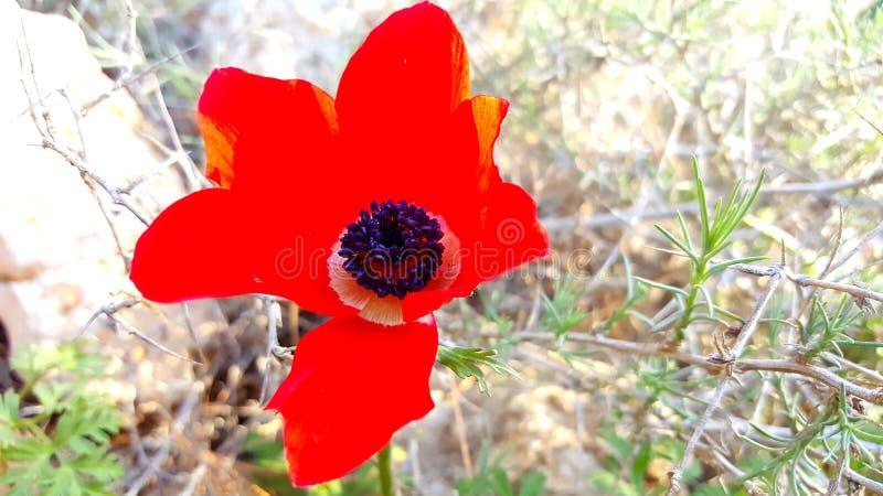 Fleur et fusée images stock