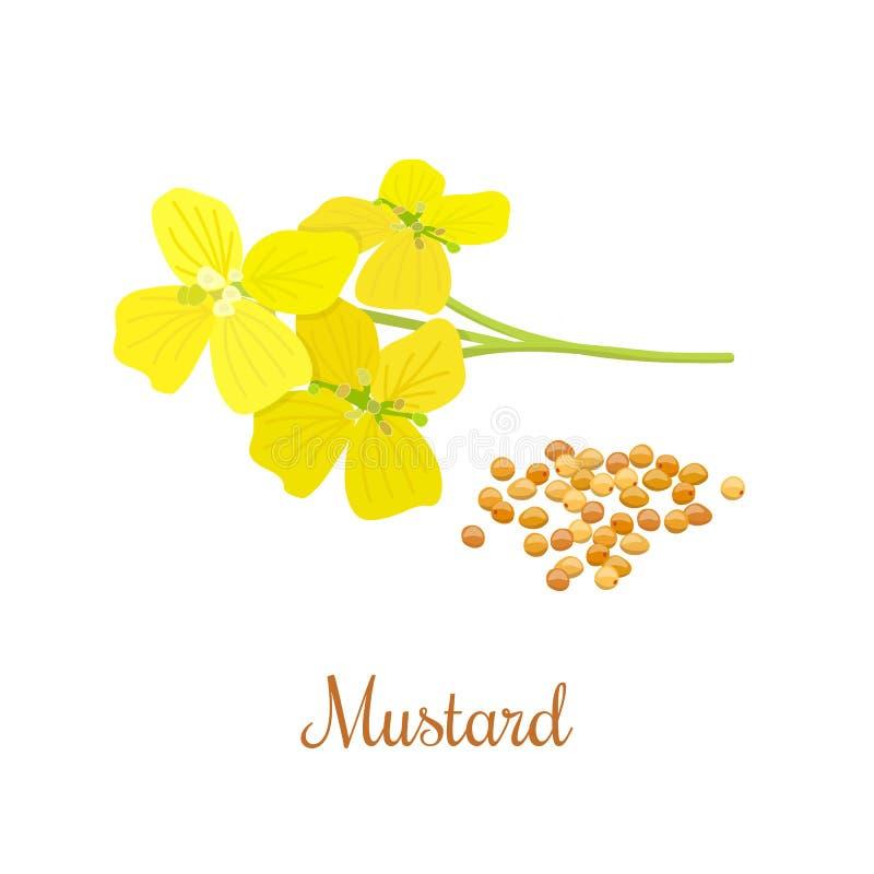 Fleur et graines de moutarde illustration libre de droits