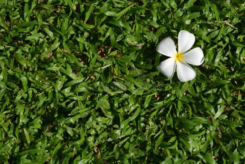 Fleur et herbe images libres de droits
