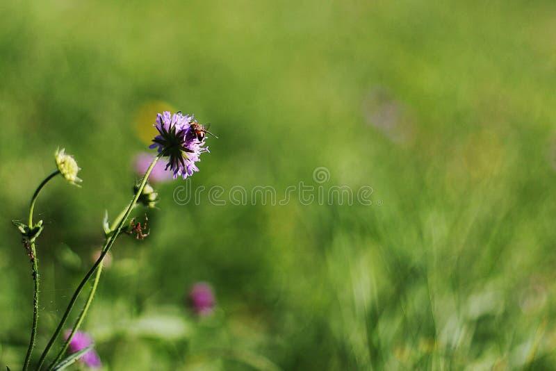 Fleur et l'abeille images stock