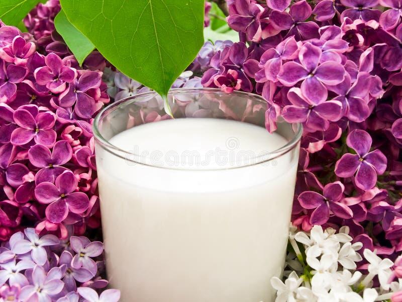 Fleur et lait lilas images stock