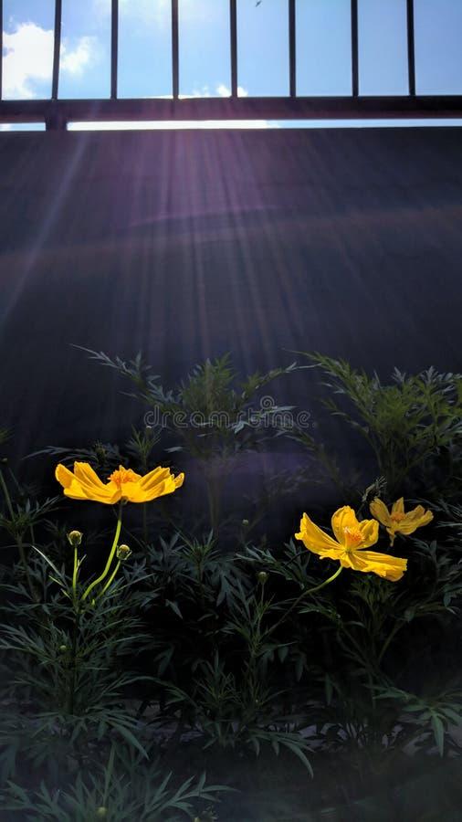 Fleur et le mur images stock