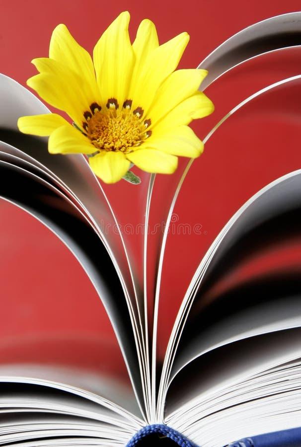Fleur et livre image libre de droits