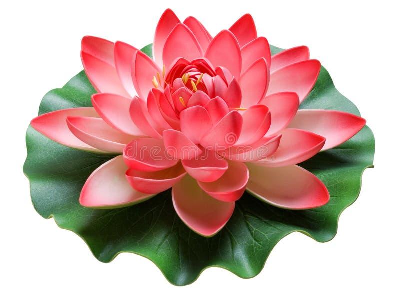 Fleur et lotus images libres de droits