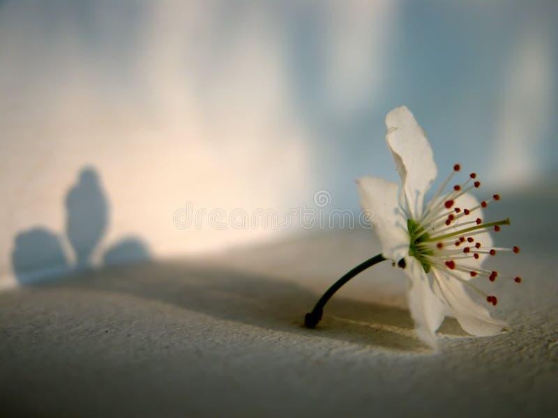 Fleur et lumière image libre de droits