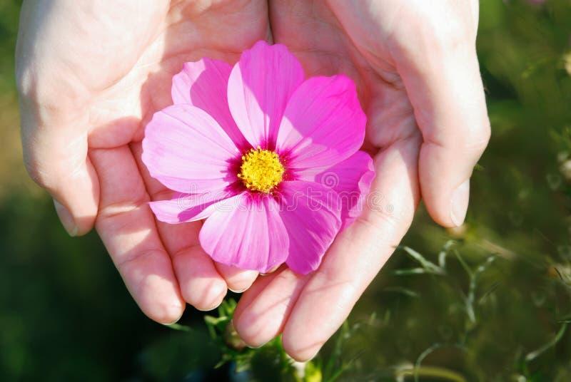 Fleur et main photos stock