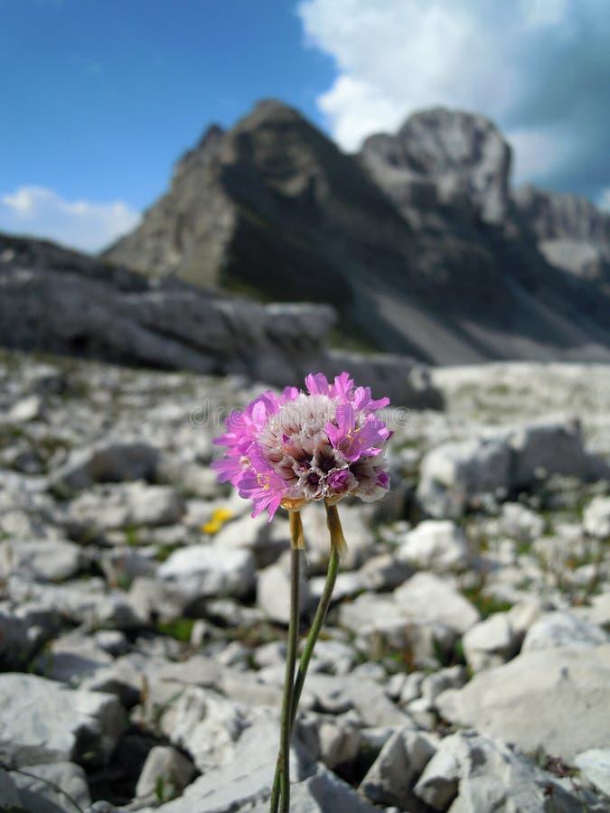 Fleur et montagnes images libres de droits