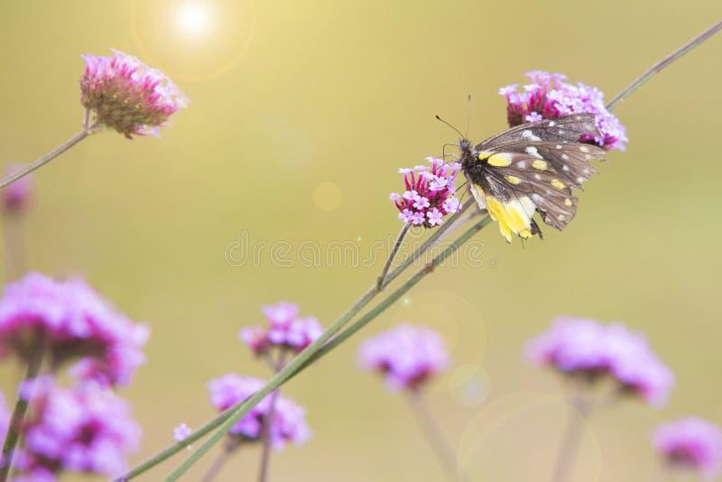 Fleur et papillon doux photo stock