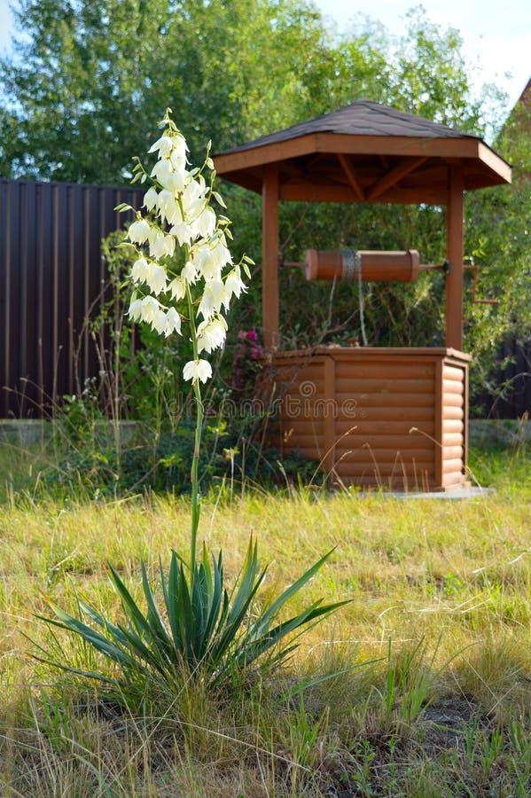 Fleur et puits photographie stock libre de droits