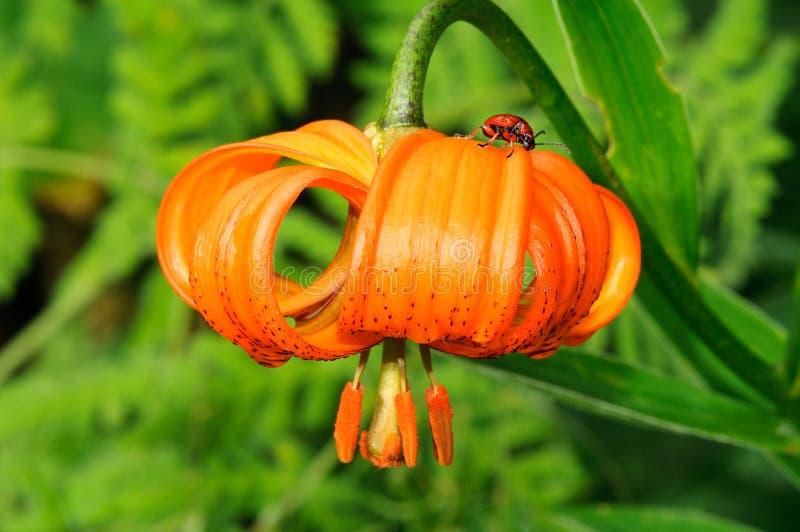 Fleur et une anomalie photographie stock