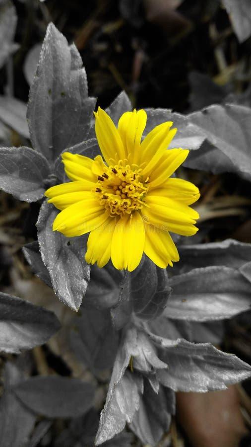 Fleur exotique photos stock
