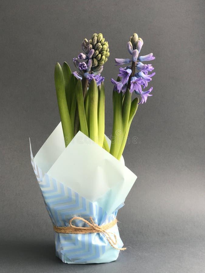Fleur exotique pourpre sur le fond gris images stock