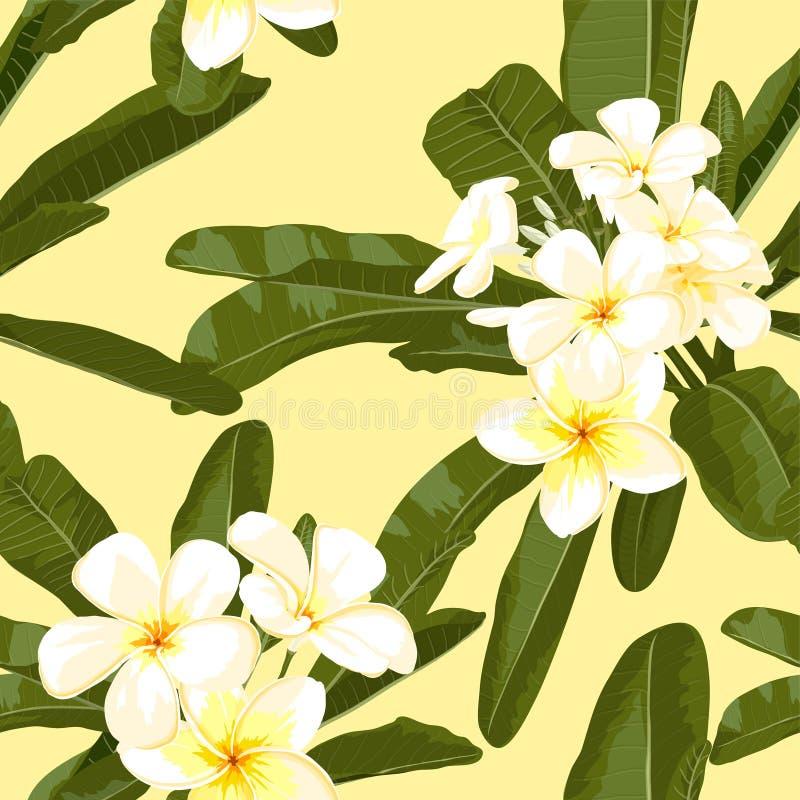 Fleur exotique. Pulmeria 3 illustration stock