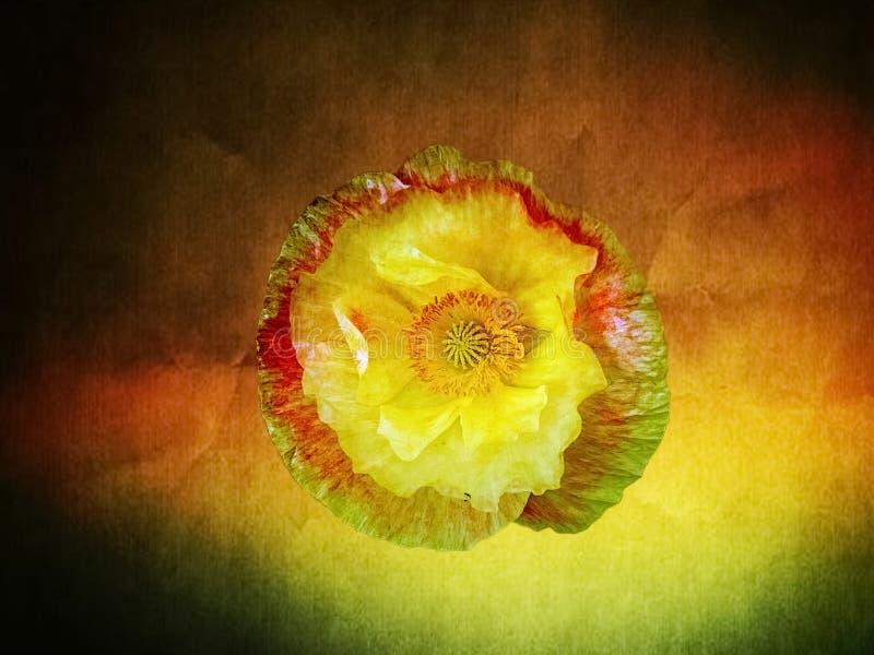 Fleur féerique illustration de vecteur