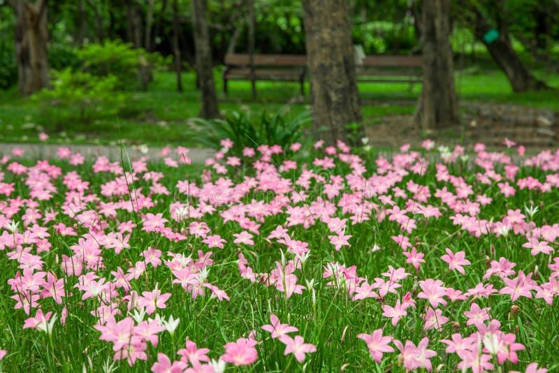 Fleur féerique de lis dans le jardin images stock
