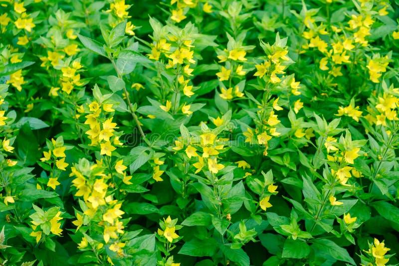Fleur florale jaune de fond de fleur vacances images stock
