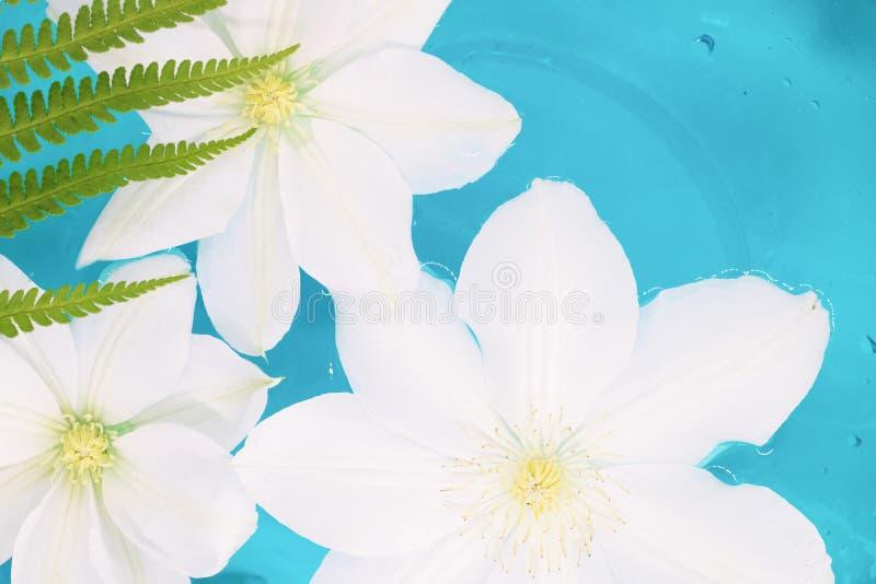 Fleur flottant dans l'eau bleue, couleurs tropicales photographie stock