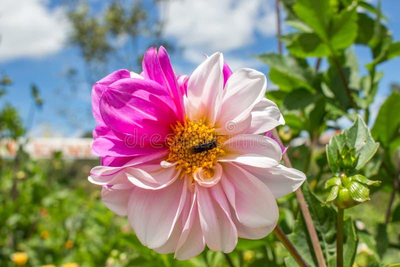 Fleur fraîche photo stock