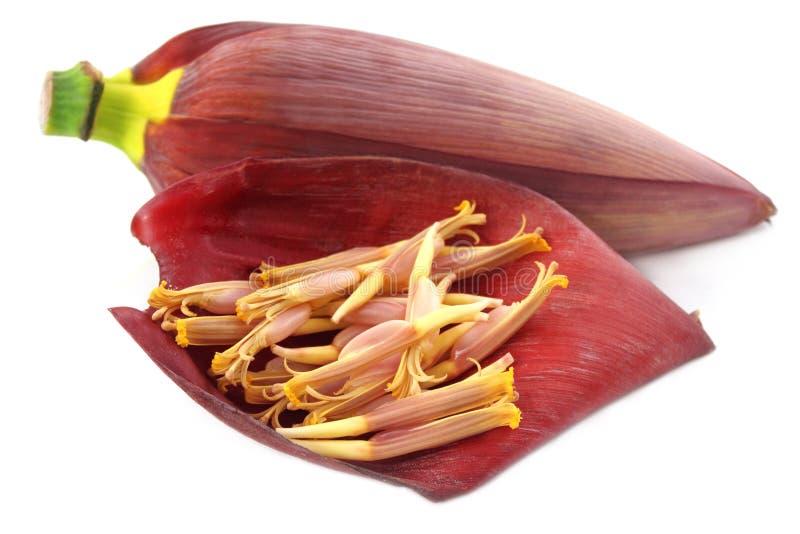 Fleur fraîche de banane photographie stock libre de droits