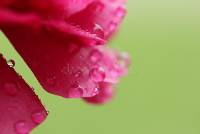 Fleur fra?che photographie stock libre de droits