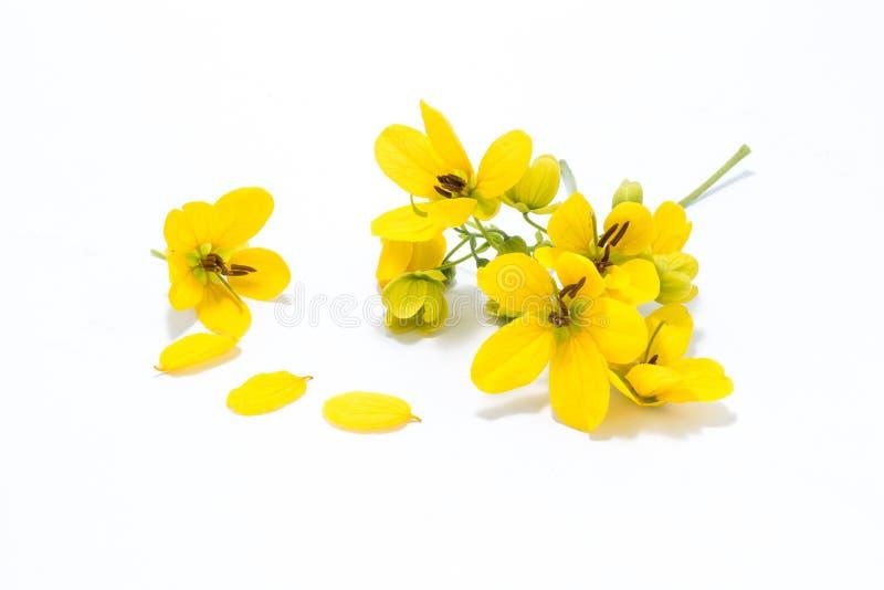 Fleur glauque de casse image stock