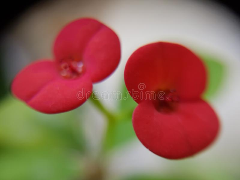 Fleur hors focale images stock