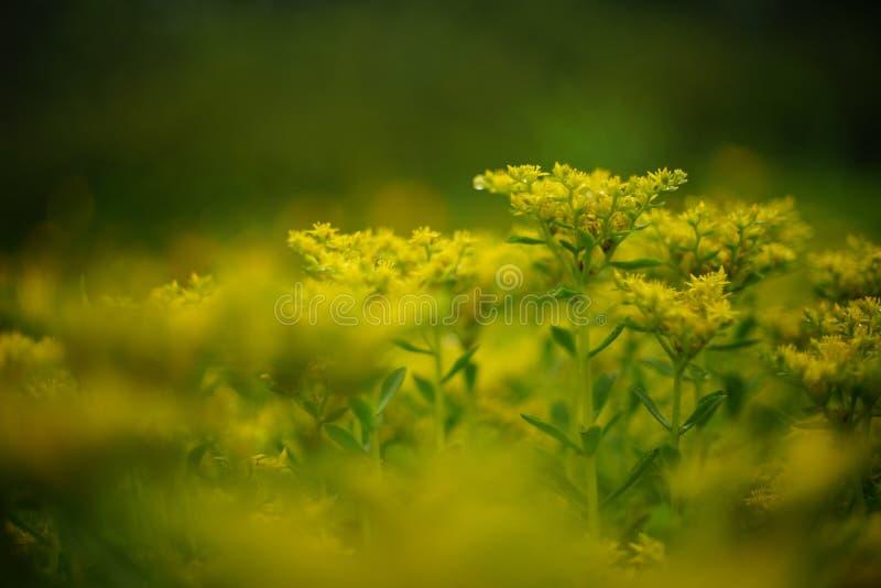 Fleur inconnue photos libres de droits